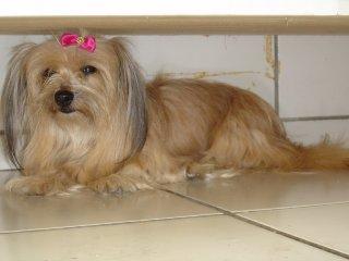 Sindy - cadelinha desaparecida
