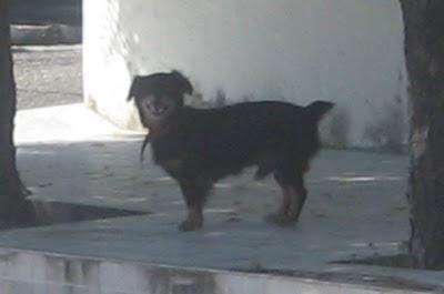Cãozinho perdido e machucado