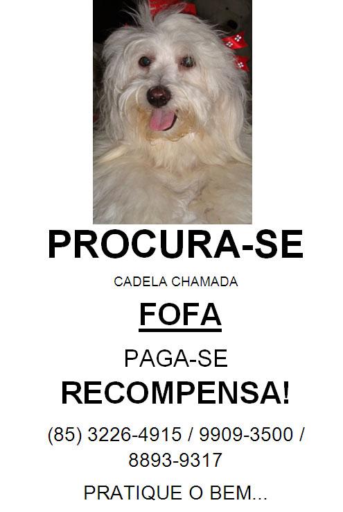 Cadelinha desaparecida em 18.10.2010, nas proximidades da Igreja do Cristo Rei, em Fortaleza/CE