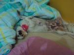 Eu adoro essa cama quentinha!