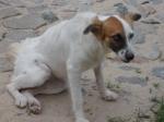 Cadelinha cega precisa de um lar seguro!