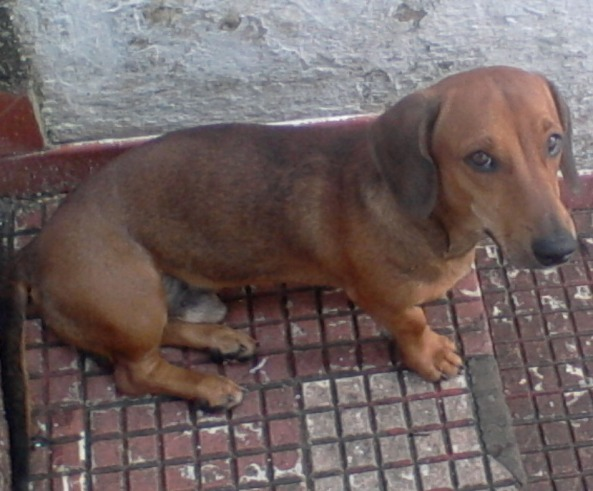 Brady, desaparecido em Fortaleza - bairro de Fátima