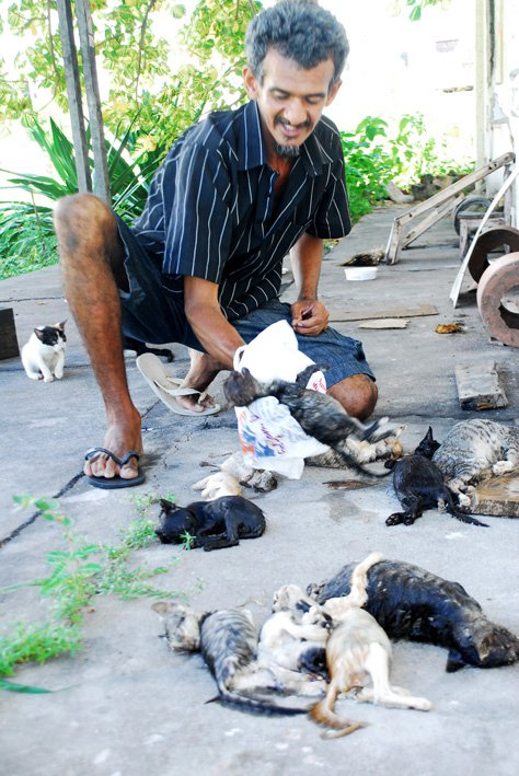 Gatos brutalmente assassinados em Sobral. Segundo protetores, não é a primeira vez que o massacre acontece!