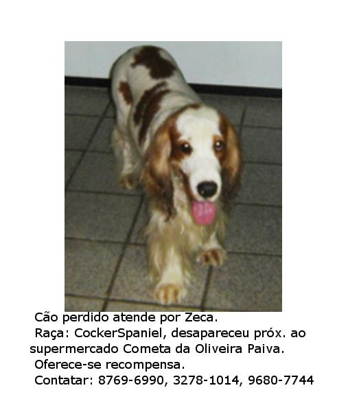 Cão cocker spaniel desaparecido na Cidade dos Funcionários