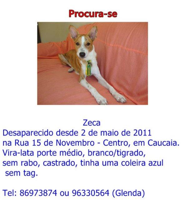 Cãozinho desaparecido em caucaia