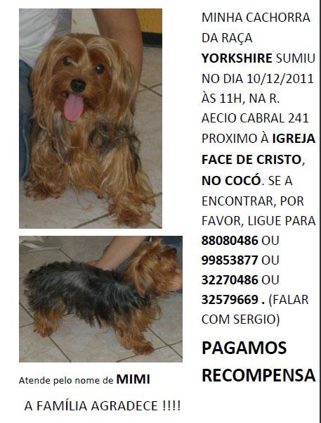 Mimi - Cadelinha desaparecida do bairro Cocó