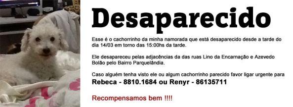 Simba - poodle desaparecido no bairro Parquelândia