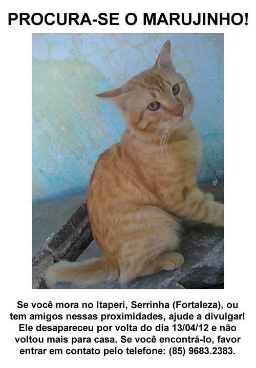 Marujinho - Gato desaparecido no bairro Itapery