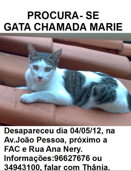 Marie - Gatinha desaparecida próximo a Av. João Pessoa