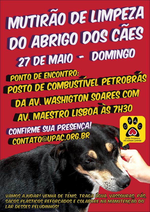 Mutirão de Limpeza e Banho no Abrigo dos Cães