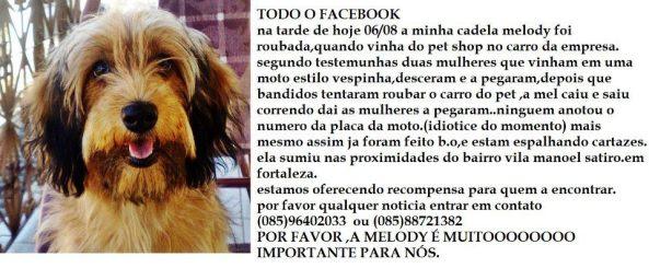 Mel - Cadelinha desaparecida prox ao bairro Vila Manoel Sátiro