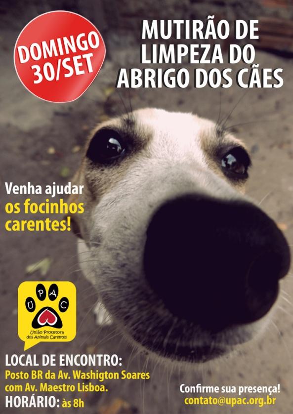 Mutirão de Limpeza e Banho no abrigo dos Cães - Set-12