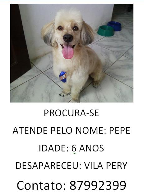 Pepe - Cãozinho desaparecido na Vila Pery