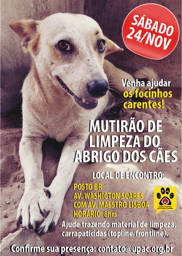 Mutirão de Limpeza e Banho no abrigo dos cães da Upac