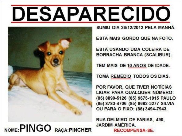Pingo - Cãozinho desaparecido no bairro Jardim América