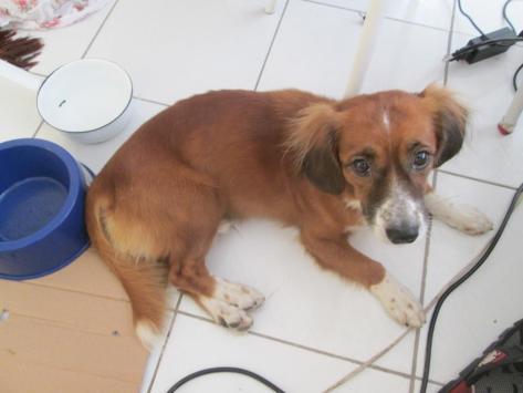 Cãozinho encontrado prox a Washington Soares