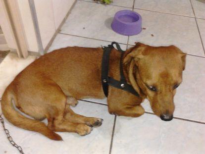 Cãozinho encontrado perto do Aeroporto