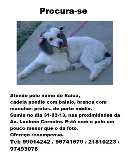 Cadelinha desaparecida no bairro de Fátima