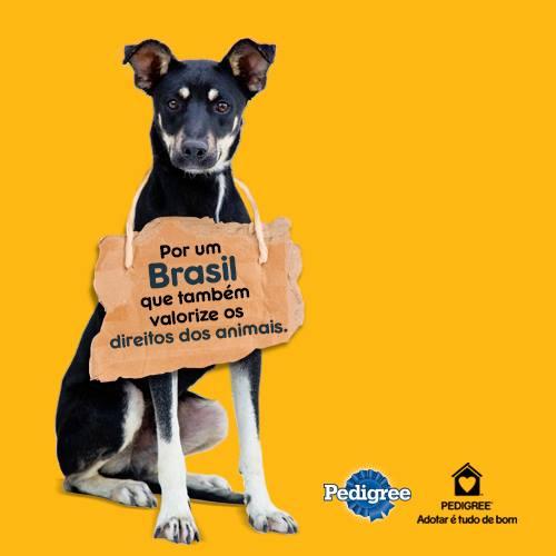 #Vemprarua Pelos direitos dos animais
