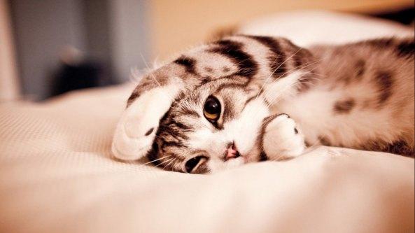 gatinho-cativante-4